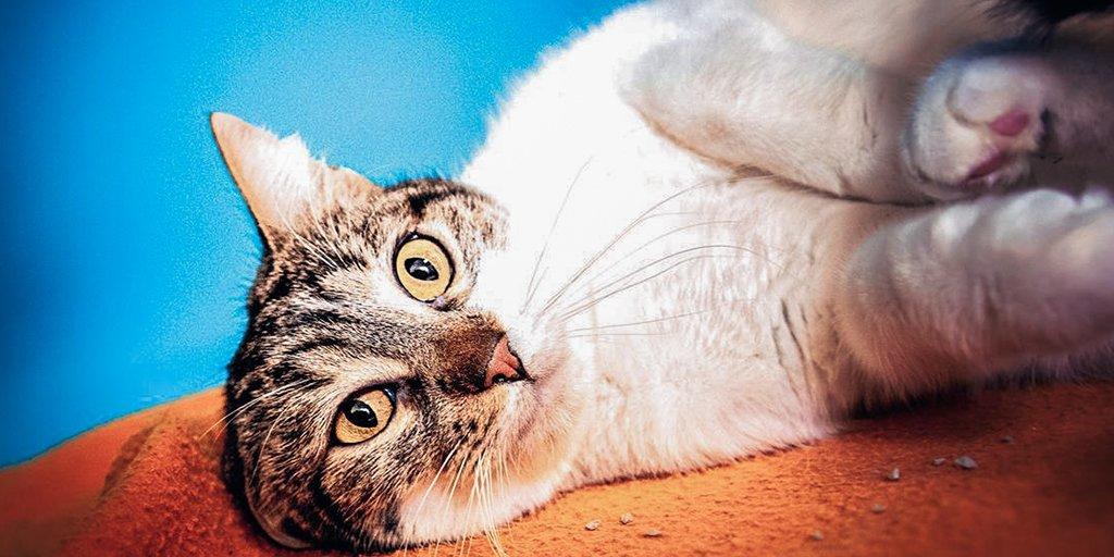 Rencontre sur le chat rond